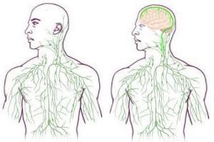 Brain lymph network