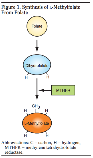 SYNTHESIS of Folate.png